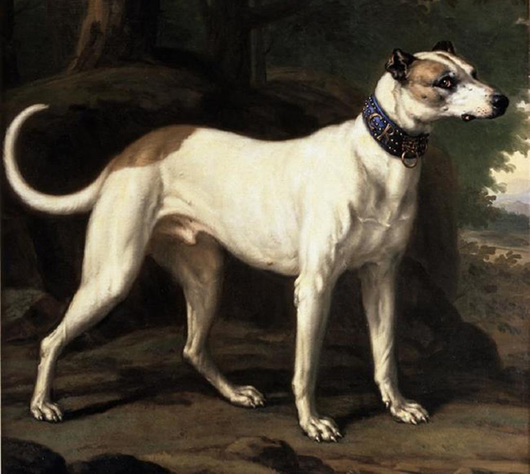 King Karl XI's dog Turck